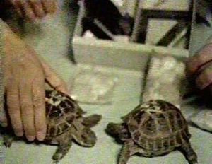 Zond 5 turtles.